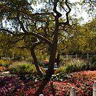 In The Garden by photosbycoleen