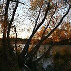 Marsh sunset by tanmari