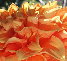 Peach Petals by Jeri Garner