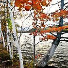 Lakeside Fall Colors by Robert H Carney