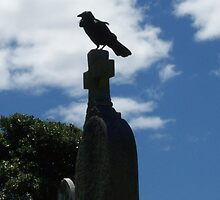 Raven at the Gerringong Cemetary by Donna Huntriss