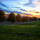 The Long Driveway at Sunset by pshootermike