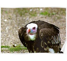 Ethel the Vulture Poster