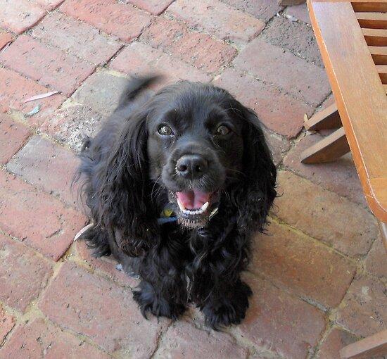 Lovely Lola. by joycee
