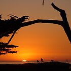 California Sunset by Monica M. Winkler
