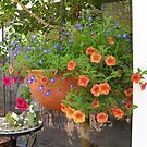 Hanging basket of colour by joycee