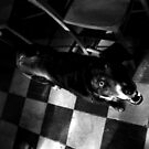 Old Black Dog in a Church by RedSteve