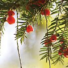 Nature's Christmas by Anne Staub