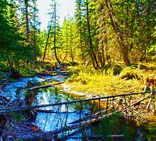 Beaver Creek by Vika71