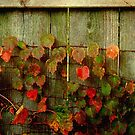 Fence Decoration   by Dawn M. Becker