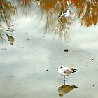 Seagulls by djnoel