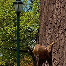 This is my tree!!! by Jim Butera