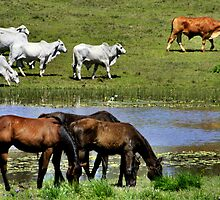 Horses and Cows by hans p olsen