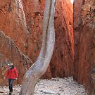 Standley Chasm 3 by Cheryl Parkes