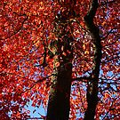 Autumn All Ablaze by Lisa G. Putman