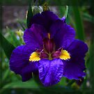 Vibrant Purple by Keith G. Hawley