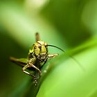 Cricket on grass by Chris West