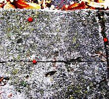 Fallen Berries  by heartyart