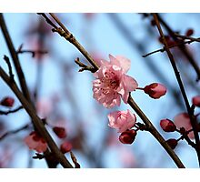 Buds and Blossoms Photographic Print