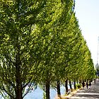 Tree-Lined Walk in Seattle by Loveley Photography