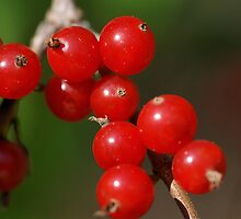 Beautiful Berries by Tim Devine