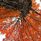 nature's canopy by janetlee