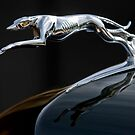 1937 Lincoln K Brunn &quot;Greyhound&quot; Hood Ornament by Jill Reger