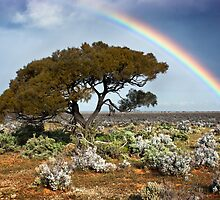 Rainbow Tree by Ben Goode