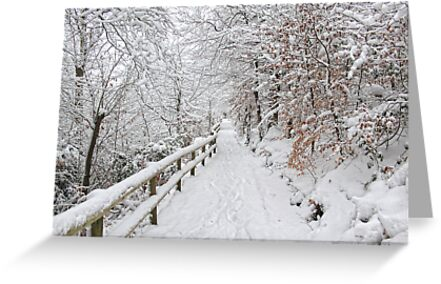 The winter lane by Lyn Evans