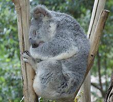 One Happy Koala by ScottishDoonie