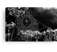 Dewy spiders' webs Canvas Print