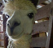 Pawque (Pah-Coo) Alpaca by RealPainter