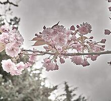 Vintage Blooms by sagemountain