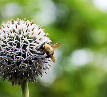 Bumble Bee by katelynnlambert