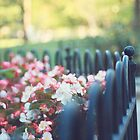 Fenced in Flowers by Wendy Ramos