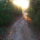 Path to Paradise by Dan McKenzie