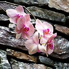 Stone wall with Orchids by Diane Rodriguez