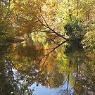 Splendor in the Park by Monnie Ryan