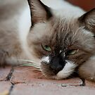 Cat looking bored by Alice Kent
