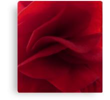 Begonia folds Canvas Print