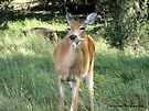 Deer Eating An Ice Cream Cone by Barberelli