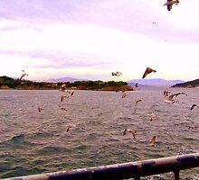 Seagulls over the Sea of Marmara (Istanbul) by Rusty  Gladdish