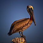 Brown Pelican on Pier by Phillip  Judy