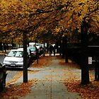 Tree Hallway (Fall) by Kyle LeBlanc