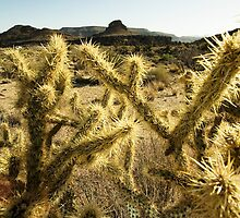Mojave Desert 2 by Kate Krutzner