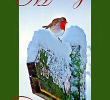 Red Robin Christmas Card by Aj Finan