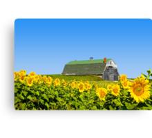 Sunflower A Barn Canvas Print