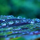 Waterdrops.  by emerymills