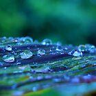 Waterdrops.  by emerymills