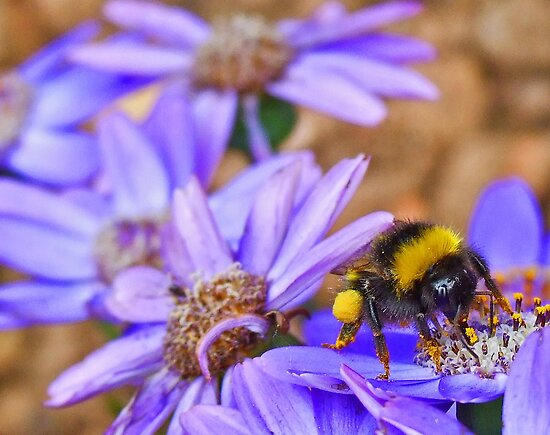 Bumble Bee by jasongambone74